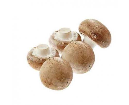 Гъба Кралска печурка